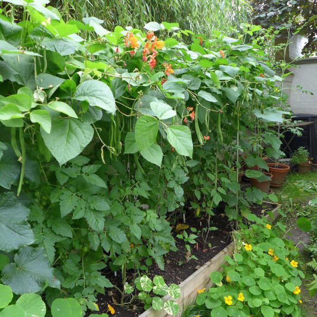 Tận dụng mảnh đất phía sau nhà, người đàn ông đảm đang trồng đủ loại thực phẩm sạch cho cả nhà thưởng thức - Ảnh 11.