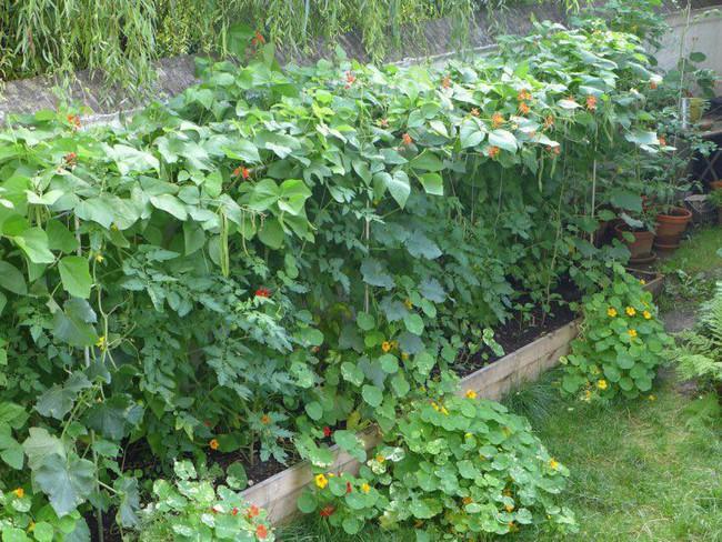 Tận dụng mảnh đất phía sau nhà, người đàn ông đảm đang trồng đủ loại thực phẩm sạch cho cả nhà thưởng thức - Ảnh 2.