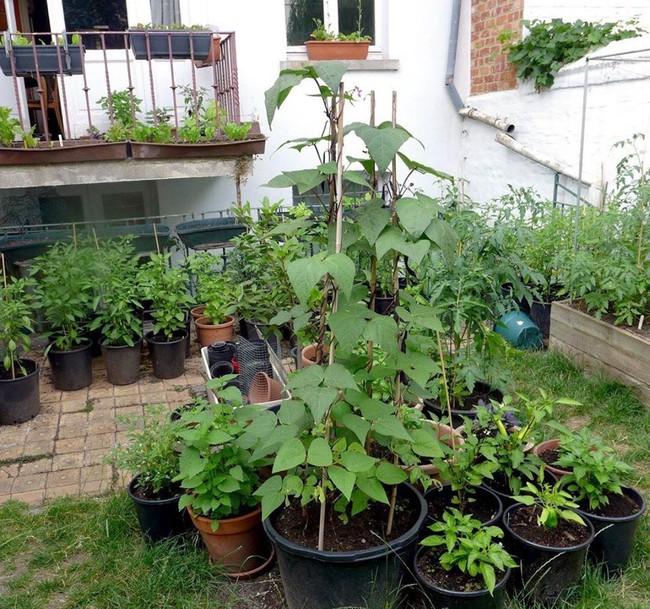Tận dụng mảnh đất phía sau nhà, người đàn ông đảm đang trồng đủ loại thực phẩm sạch cho cả nhà thưởng thức - Ảnh 8.