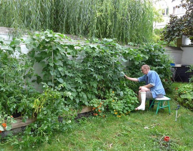 Tận dụng mảnh đất phía sau nhà, người đàn ông đảm đang trồng đủ loại thực phẩm sạch cho cả nhà thưởng thức - Ảnh 1.