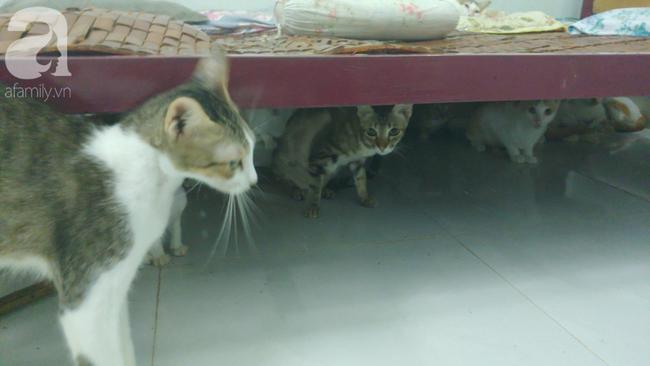 """""""Người mẹ"""" của 400 con mèo ở Sài Gòn bật khóc tức tưởi khi bị tông xe còn mang tiếng oan đi bắt trộm mèo - Ảnh 2."""