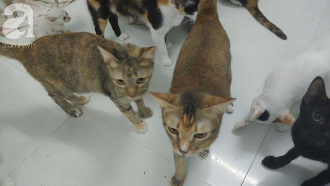 """""""Người mẹ"""" của 400 con mèo ở Sài Gòn bật khóc tức tưởi khi bị tông xe còn mang tiếng oan đi bắt trộm mèo - Ảnh 15."""