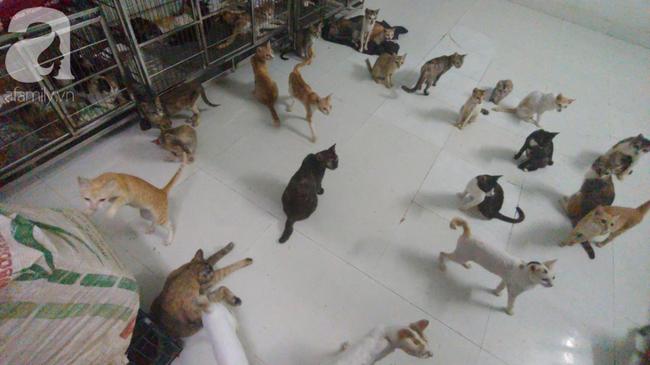 """""""Người mẹ"""" của 400 con mèo ở Sài Gòn bật khóc tức tưởi khi bị tông xe còn mang tiếng oan đi bắt trộm mèo - Ảnh 11."""
