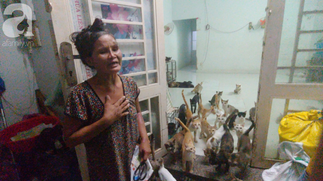 """""""Người mẹ"""" của 400 con mèo ở Sài Gòn bật khóc tức tưởi khi bị tông xe còn mang tiếng oan đi bắt trộm mèo - Ảnh 1."""