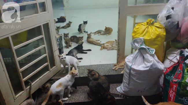 """""""Người mẹ"""" của 400 con mèo ở Sài Gòn bật khóc tức tưởi khi bị tông xe còn mang tiếng oan đi bắt trộm mèo - Ảnh 4."""