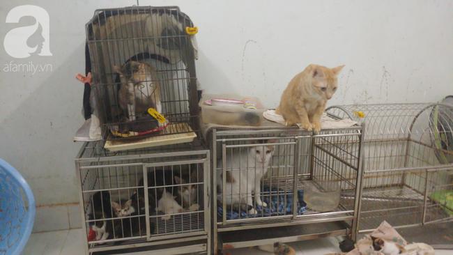 """""""Người mẹ"""" của 400 con mèo ở Sài Gòn bật khóc tức tưởi khi bị tông xe còn mang tiếng oan đi bắt trộm mèo - Ảnh 6."""