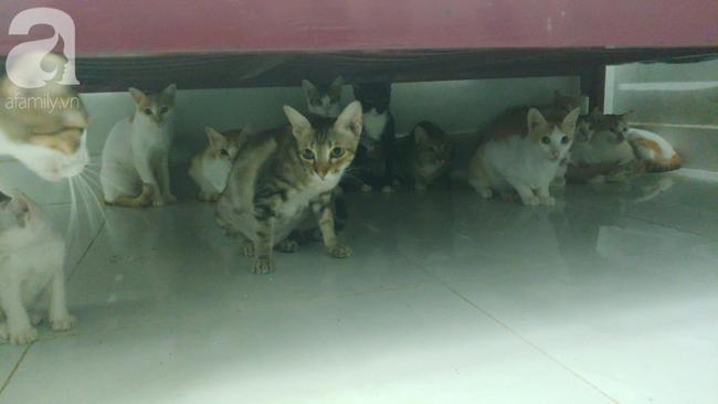 """""""Người mẹ"""" của 400 con mèo ở Sài Gòn bật khóc tức tưởi khi bị tông xe còn mang tiếng oan đi bắt trộm mèo - Ảnh 7."""