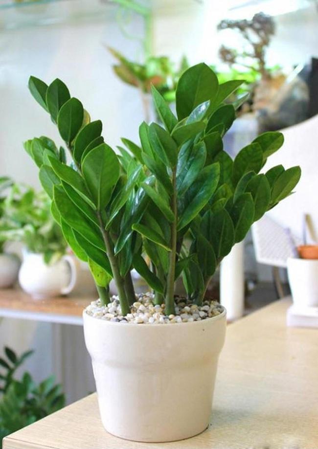 Cẩn thận với những cây cảnh có độc được trồng phổ biến trong nhà - Ảnh 1.
