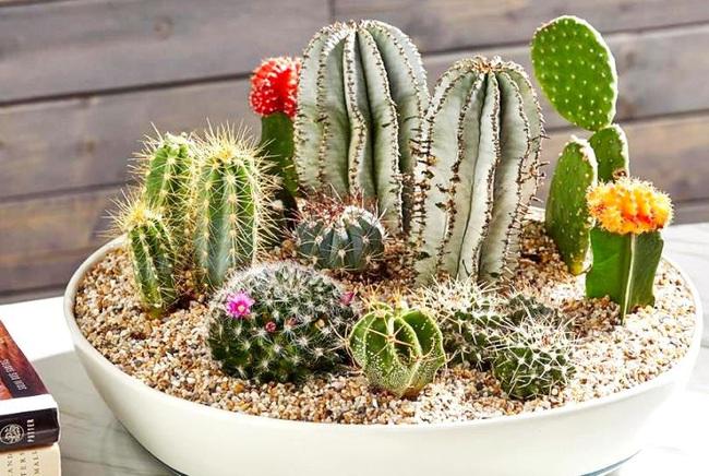 Cẩn thận với những cây cảnh có độc được trồng phổ biến trong nhà - Ảnh 7.
