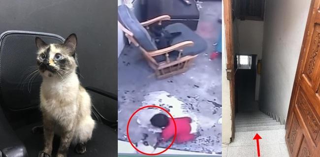 """Trong khi mèo nhà bạn chỉ biết ăn vụng, chú """"miu"""" này đã cứu cậu chủ nhỏ khỏi cú ngã chí mạng! - Ảnh 1."""