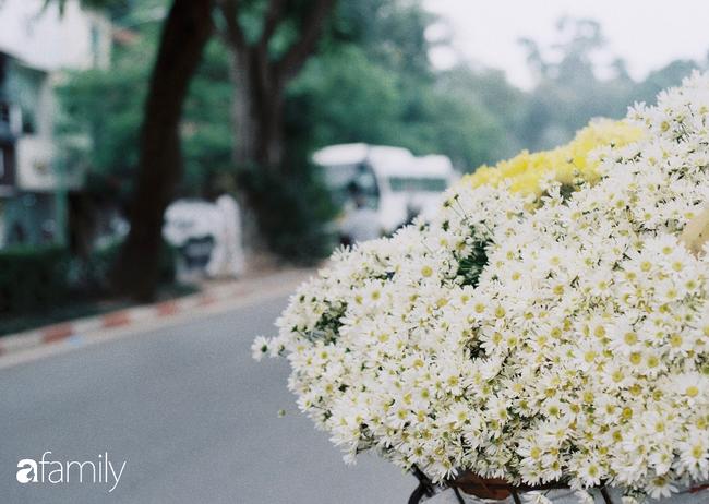 Mùa hè lưu luyến mãi chưa đi, nhưng cúc họa mi vẫn giữ đúng hẹn, chúm chím trên phố Hà Nội khi tháng Mười Một về - Ảnh 2.