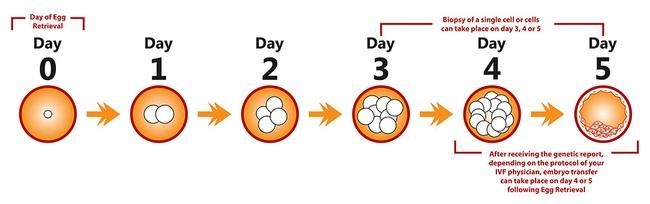 Xét nghiệm di truyền tiền làm tổ giúp các bà mẹ sinh con khỏe mạnh - Ảnh 4.
