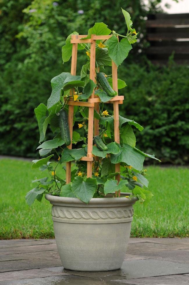 Những ý tưởng cùng mẹo thiết kế vườn rau siêu tuyệt vời giúp không gian nhỏ hẹp cũng thành đáng mơ ước - Ảnh 1.