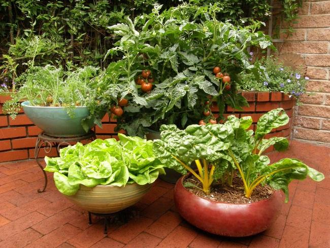 Những ý tưởng cùng mẹo thiết kế vườn rau siêu tuyệt vời giúp không gian nhỏ hẹp cũng thành đáng mơ ước - Ảnh 10.