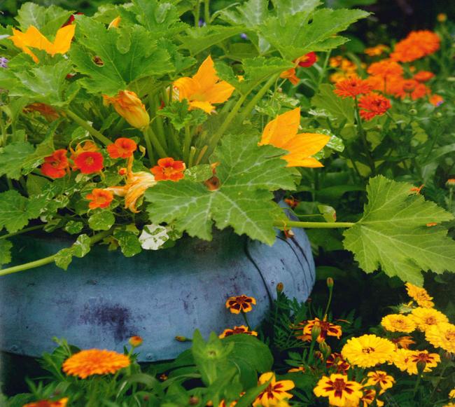 Những ý tưởng cùng mẹo thiết kế vườn rau siêu tuyệt vời giúp không gian nhỏ hẹp cũng thành đáng mơ ước - Ảnh 6.
