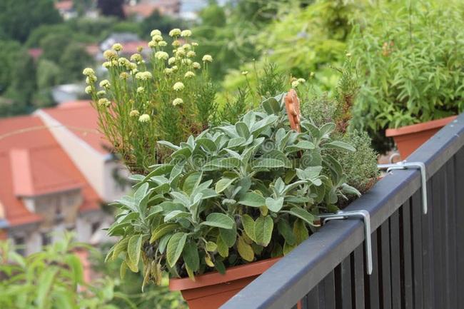 Những ý tưởng cùng mẹo thiết kế vườn rau siêu tuyệt vời giúp không gian nhỏ hẹp cũng thành đáng mơ ước - Ảnh 7.