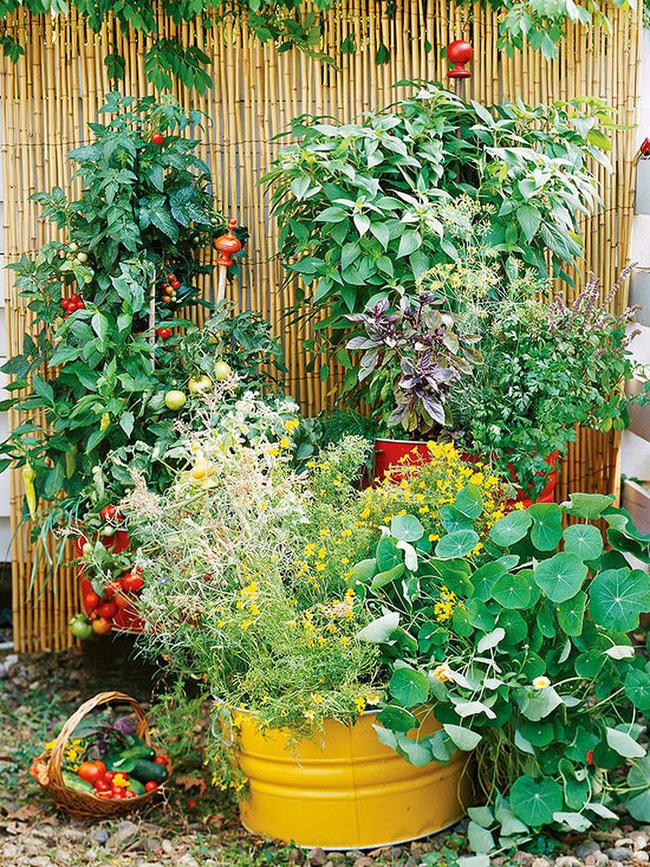 Những ý tưởng cùng mẹo thiết kế vườn rau siêu tuyệt vời giúp không gian nhỏ hẹp cũng thành đáng mơ ước - Ảnh 9.