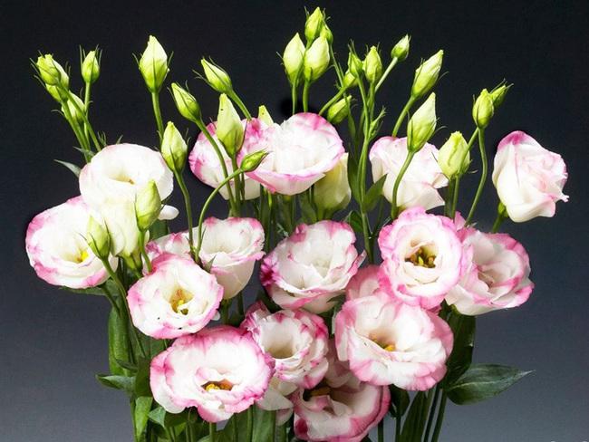 Những loại hoa nên chưng trên bàn thờ dịp Tết cho năm mới thịnh vượng, an khang - Ảnh 2.