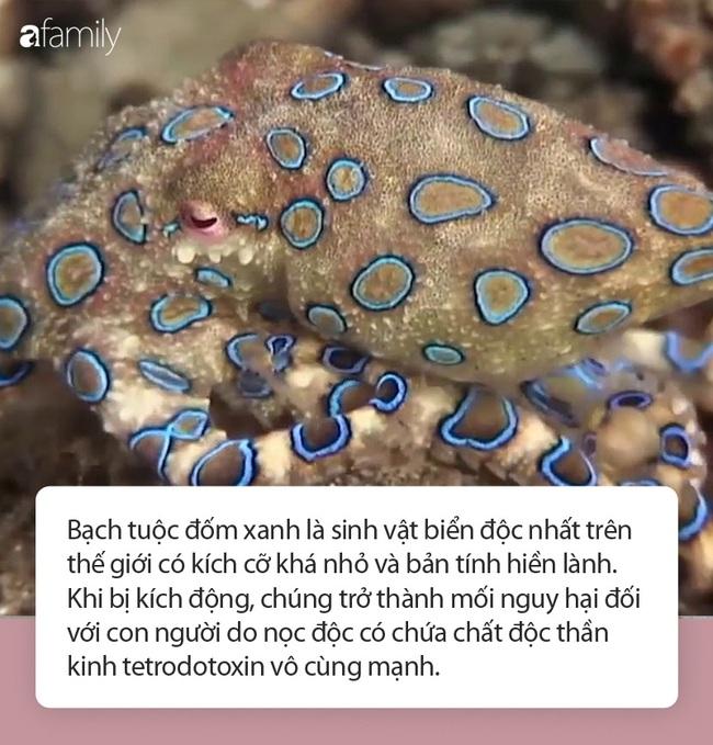 Cẩn trọng thực phẩm có bản sao y như bạch tuộc vẫn ăn nhưng có nọc độc gấp 50 lần rắn hổ mang, hàm lượng nhỏ vẫn giết chết 10 người trên 70kg - Ảnh 3.