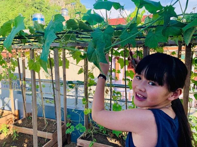 Sân thượng 50m2 với rau xanh và quả ngọt đẹp như tranh vẽ của gia đình 4 người ở TP Sơn La - Ảnh 16.