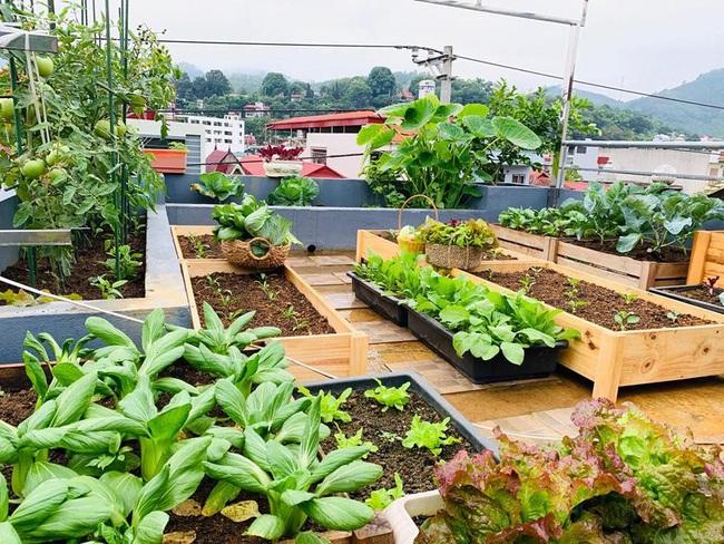 Sân thượng 50m2 với rau xanh và quả ngọt đẹp như tranh vẽ của gia đình 4 người ở TP Sơn La - Ảnh 1.