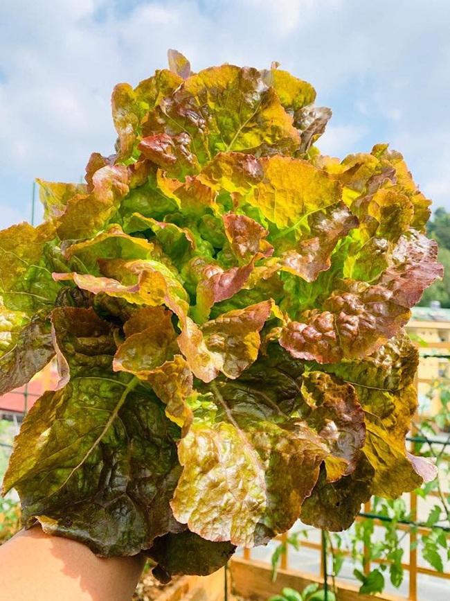 Sân thượng 50m2 với rau xanh và quả ngọt đẹp như tranh vẽ của gia đình 4 người ở TP Sơn La - Ảnh 20.