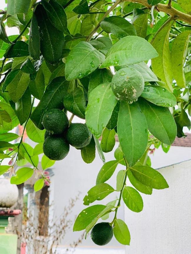 Sân thượng 50m2 với rau xanh và quả ngọt đẹp như tranh vẽ của gia đình 4 người ở TP Sơn La - Ảnh 11.
