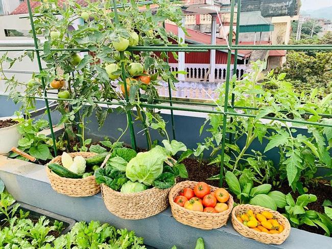 Sân thượng 50m2 với rau xanh và quả ngọt đẹp như tranh vẽ của gia đình 4 người ở TP Sơn La - Ảnh 4.