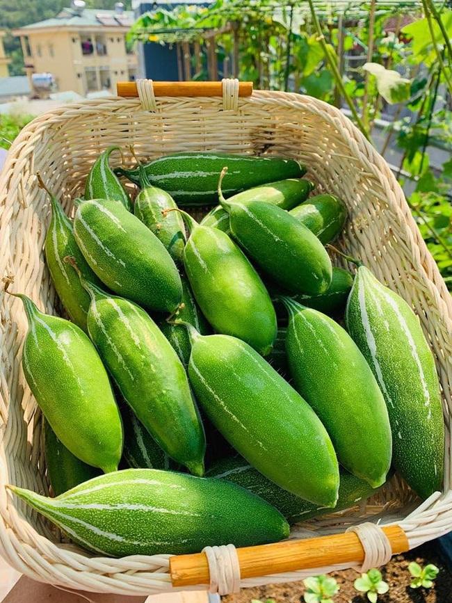 Sân thượng 50m2 với rau xanh và quả ngọt đẹp như tranh vẽ của gia đình 4 người ở TP Sơn La - Ảnh 10.