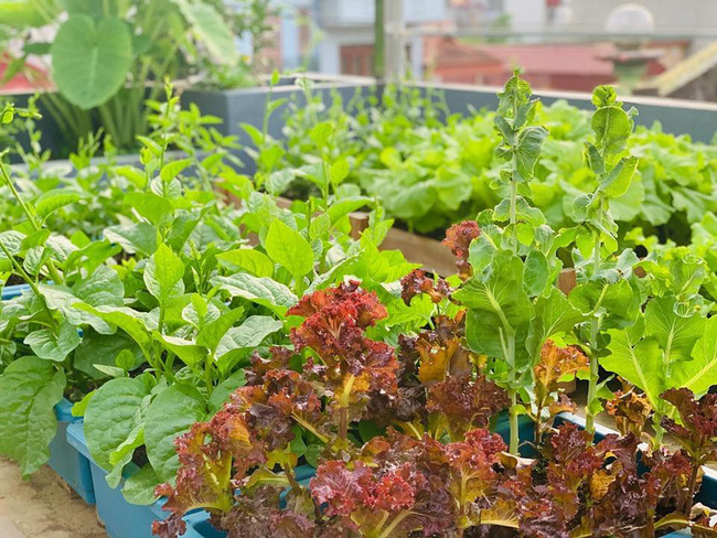 Sân thượng 50m2 với rau xanh và quả ngọt đẹp như tranh vẽ của gia đình 4 người ở TP Sơn La - Ảnh 3.