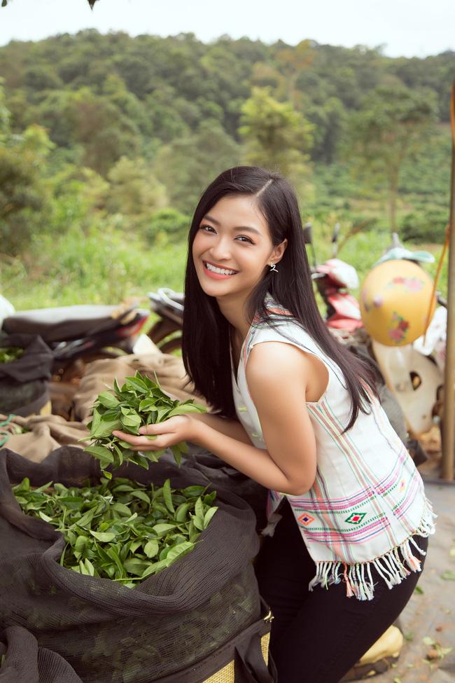 Đỗ Mỹ Linh - Kiều Loan hóa thôn nữ khoe sắc giữa đồi trà - Ảnh 1.