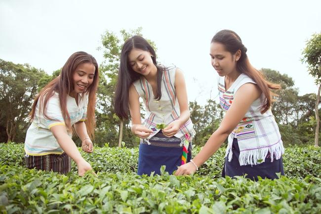 Đỗ Mỹ Linh - Kiều Loan hóa thôn nữ khoe sắc giữa đồi trà - Ảnh 5.