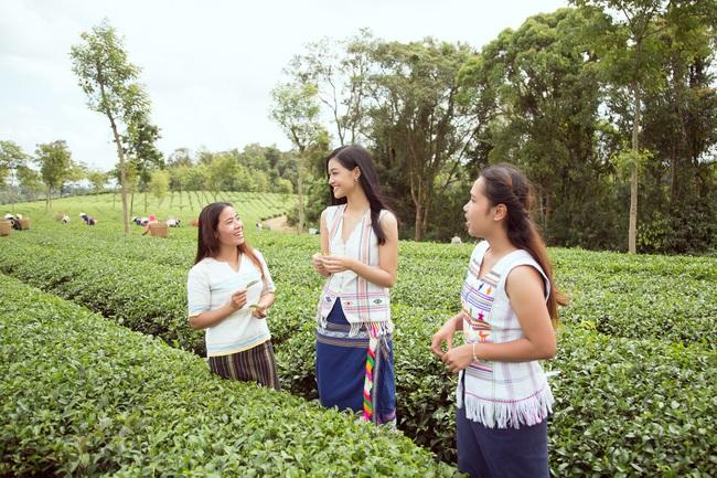 Đỗ Mỹ Linh - Kiều Loan hóa thôn nữ khoe sắc giữa đồi trà - Ảnh 6.
