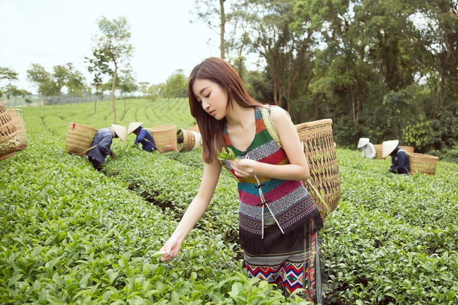 Đỗ Mỹ Linh - Kiều Loan hóa thôn nữ khoe sắc giữa đồi trà - Ảnh 7.