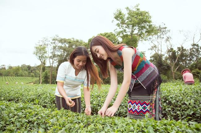 Đỗ Mỹ Linh - Kiều Loan hóa thôn nữ khoe sắc giữa đồi trà - Ảnh 8.