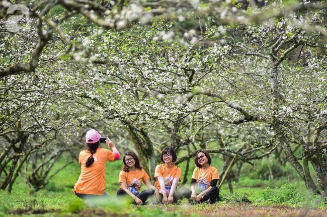 Ngược lên Mộc Châu tháng hai mùa xuân, ngắm hoa mận nở trắng trời - Ảnh 7.