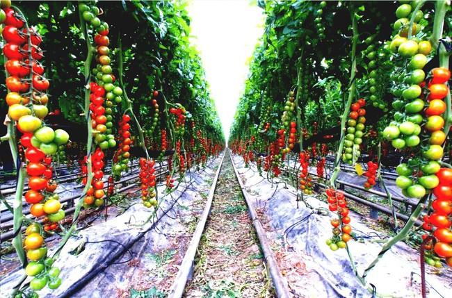 8 mẹo giúp khu vườn của bạn tươi tốt trong mùa xuân để đón chào những đợt thu hoạch mới - Ảnh 1.