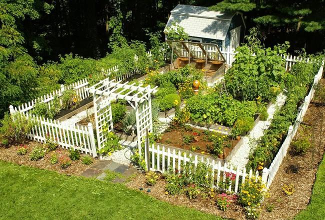 8 mẹo giúp khu vườn của bạn tươi tốt trong mùa xuân để đón chào những đợt thu hoạch mới - Ảnh 2.