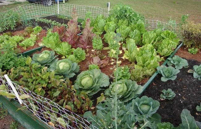 8 mẹo giúp khu vườn của bạn tươi tốt trong mùa xuân để đón chào những đợt thu hoạch mới - Ảnh 3.
