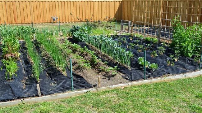 8 mẹo giúp khu vườn của bạn tươi tốt trong mùa xuân để đón chào những đợt thu hoạch mới - Ảnh 4.