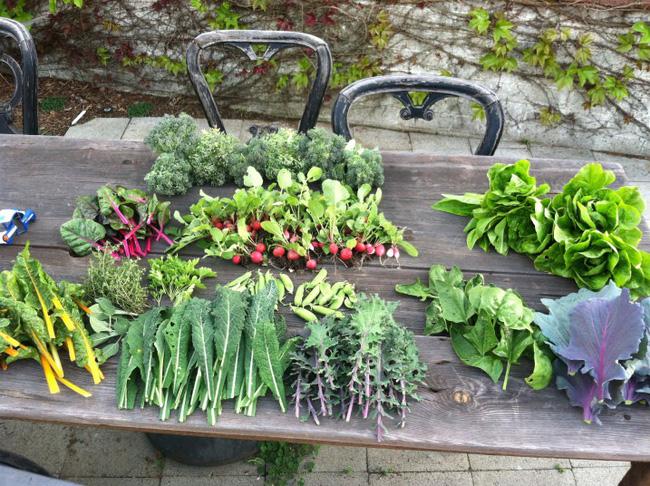 8 mẹo giúp khu vườn của bạn tươi tốt trong mùa xuân để đón chào những đợt thu hoạch mới - Ảnh 5.