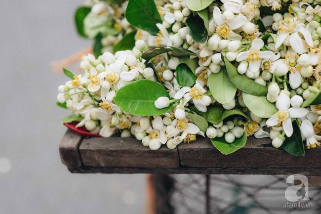 Cứ thấy 4 loài hoa này xuất hiện thì biết ngay tháng 3 đã về rồi - Ảnh 1.