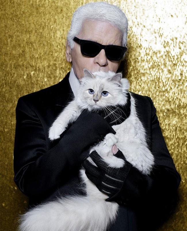 """Chẳng phải ai khác, mèo Choupette mới chính là """"nàng thơ"""" nổi tiếng nhất của Karl Lagerfeld với vẻ đẹp vừa sang chảnh lại ngọt ngào - Ảnh 1."""