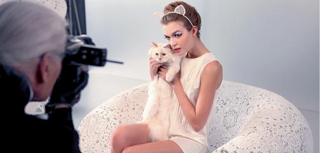 """Chẳng phải ai khác, mèo Choupette mới chính là """"nàng thơ"""" nổi tiếng nhất của Karl Lagerfeld với vẻ đẹp vừa sang chảnh lại ngọt ngào - Ảnh 8."""