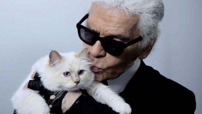 """Chẳng phải ai khác, mèo Choupette mới chính là """"nàng thơ"""" nổi tiếng nhất của Karl Lagerfeld với vẻ đẹp vừa sang chảnh lại ngọt ngào - Ảnh 2."""