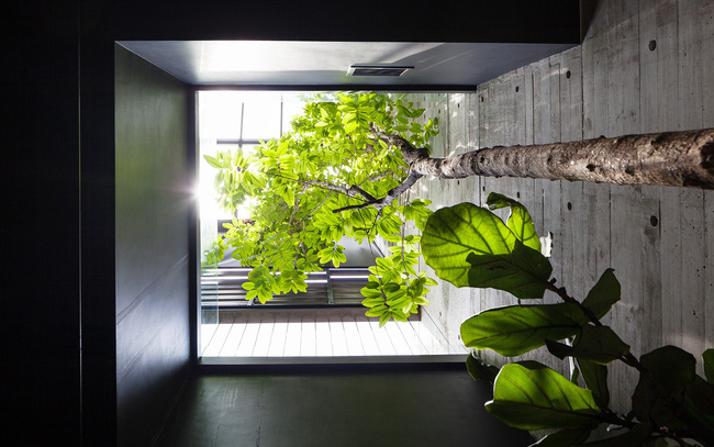 Ngôi nhà có mặt tiền lọc ánh sáng và không khí, tạo môi trường trong lành, sạch sẽ cho người sống trong nhà - Ảnh 7.