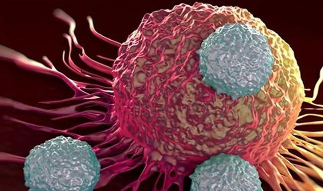 Người phụ nữ gây sốc khi chữa ung thư bằng cách ăn 5 con mọt sống mỗi ngày: Chuyên gia nói gì? - Ảnh 3.
