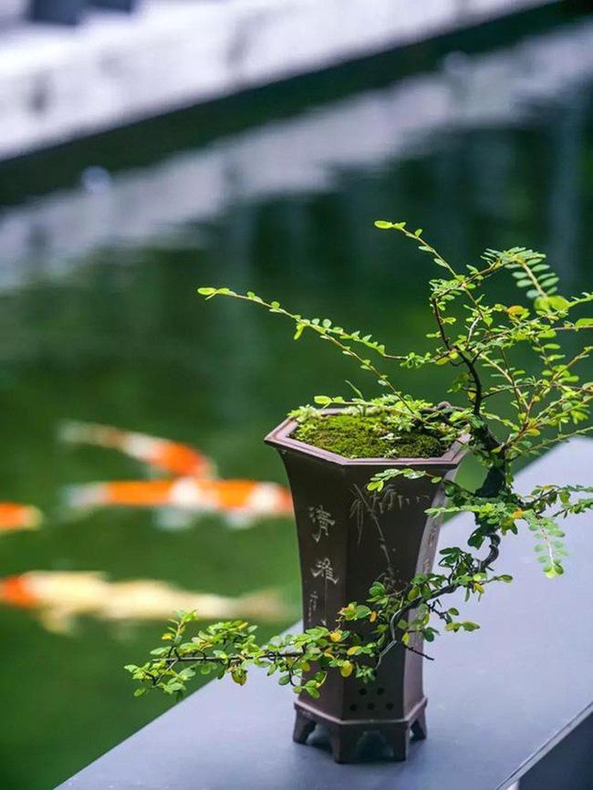 Cuộc sống an yên của người đàn ông độc thân trong ngôi nhà ngoại ô rộng 1000m² với thú vui uống trà, nuôi cá - Ảnh 8.