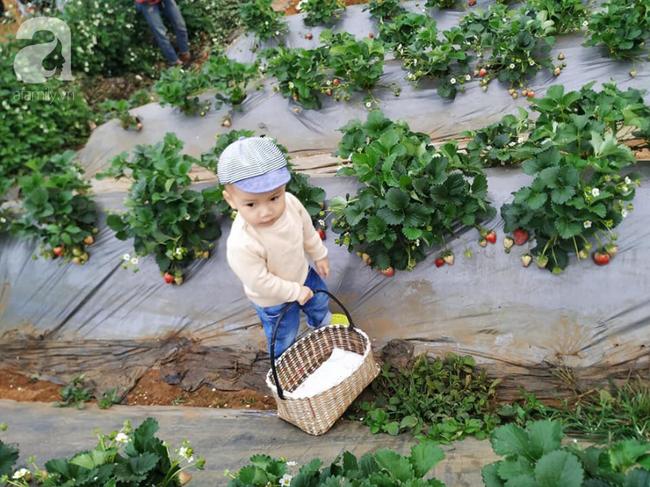 Gia đình 9X có con nhỏ mách cách du lịch Mộc Châu 2 ngày cuối tuần, chỉ 3 triệu đồng vẫn ăn ngon, chơi đã - Ảnh 8.