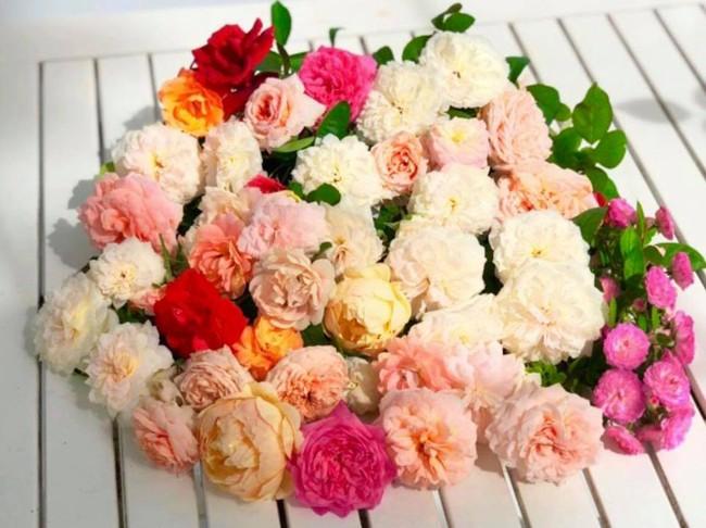 Vườn hồng với đủ loại hồng cổ, hồng ngoại khoe sắc trong biệt thự của MC Quyền Linh - Ảnh 13.